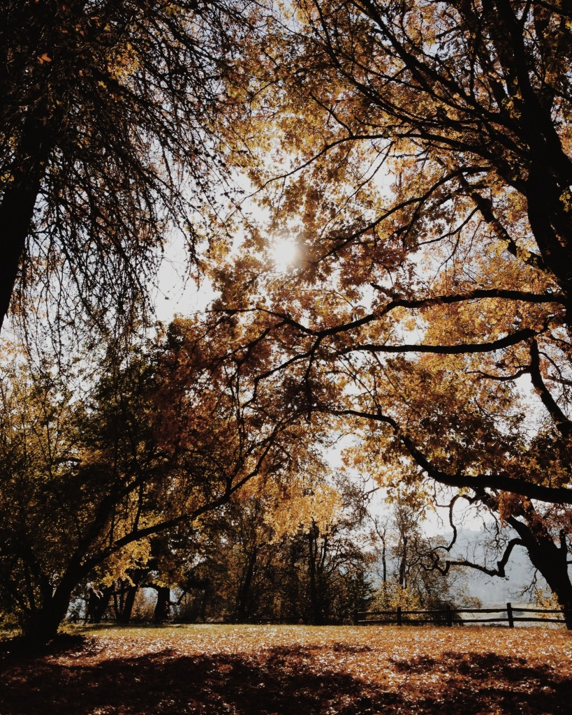 Sauvie Island in Autumn | Adored Vintage Blog